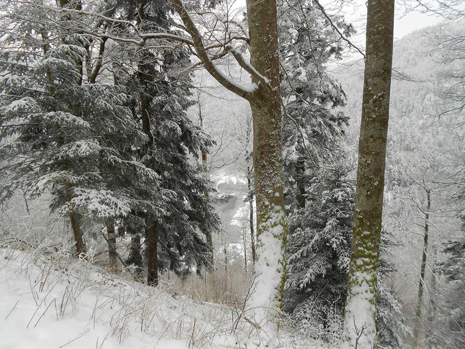 foret-en-hiver
